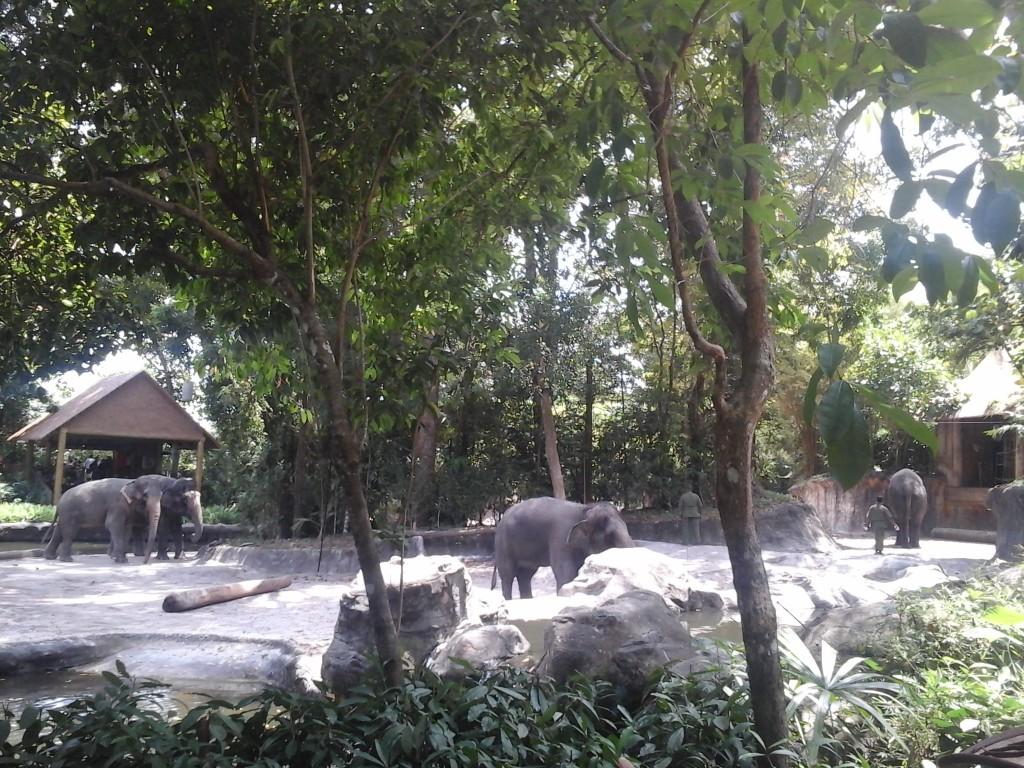 Elephants at Singapore Zoo